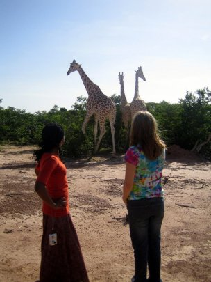 With the giraffes