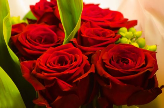 red-rose-valentine-day